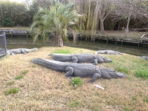 Very large alligators.
